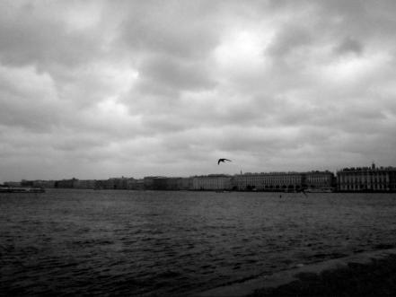 Seagull by the Nevski